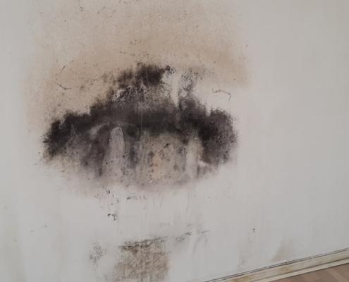 billede af skimmelsvamp